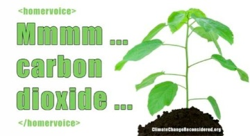 Plants Love CO2